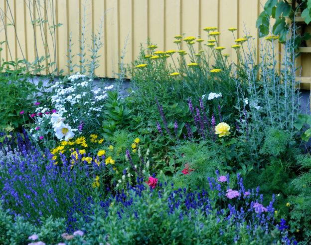 åt-det-blomma-från-tidig-vår-till-sen-höst-foto-Eva-Rönnblom